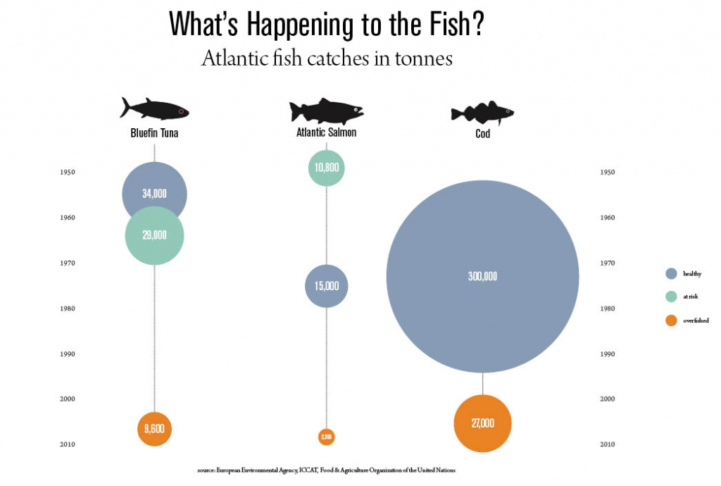 an analysis of the issue of overfishing of the atlantic cod and the dramatic decline that the fish e Cod is a cold water fish, and the gulf of maine is already at the southern edge of its livable habitat so even small changes in temperature can have a big impact.