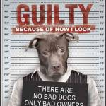 Guilty of How Look BSL
