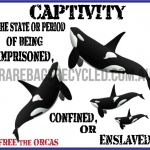 Captivity Cetaceans