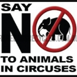 Animals No Circus