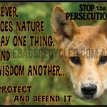 Dingo Nature Defend it