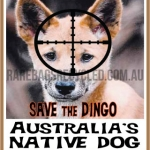 Save the Dingo