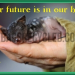 Eastern Quoll hands