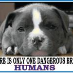Dangerous Breed Humans