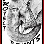 Protect Elephants