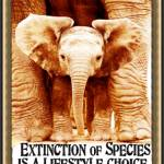 Extinction Lifestyle Elephant Calf