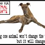 Saving one animal greyhound