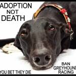 Adoption not Death