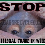 Illegal Trade Orangutan