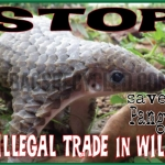 Illegal Trade Pangolin