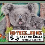 Koala No Tree No Me Habitat
