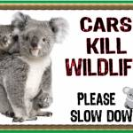 Koala cars kill wildlife