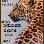 Leopard leave alone