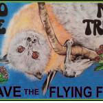 No Me No Tree Flying Fox