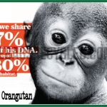 DNA shared Orangutans