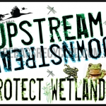 Protect Wetlands