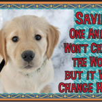 Save Puppy Snow