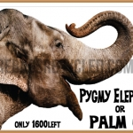Pygmy Elephant or Palm Oil