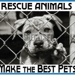 Rescue Animals Best Pets