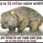 Wombat Roadkill 10 million