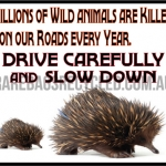 Roadkill Slow Down
