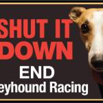 shut it down greyhound racing