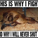 This is Why i fight Live Export