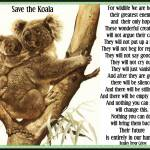 koala wildlife quote