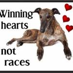 greyhound winning hearts