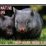 Wombat here first